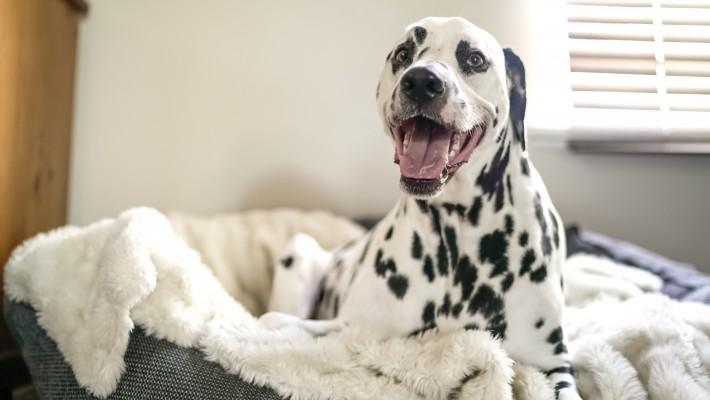 """Sesso con animali: esiste il reato di """"zooerastia""""?"""
