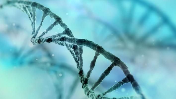 """DNA maschile nel cervello femminile,""""colpa"""" del sesso?"""